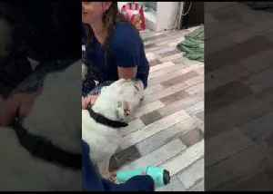 Soggy Dog Gets Salon Pampering Amid Townsville Floods [Video]