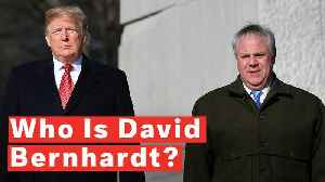 Who Is David Bernhardt? [Video]