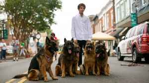 Dog Whisperer Can Walk Pack Of German Shepherds Without Leash [Video]