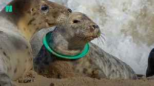 New RSPCA Report Finds A Sharp Rise In Animals Injured By Plastic [Video]