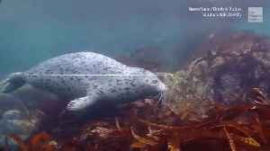 Where There's a Seal, There's a Way [Video]