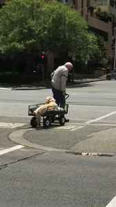 Old Man Tows Dog in Wagon Across Street [Video]