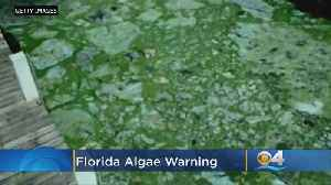 Report: Florida's Waterways, Coasts Are At A Crossroads [Video]