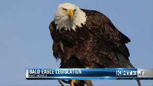 New proposal to protect bald eagles [Video]