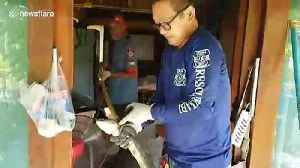 Kitchen nightmare! Rescuers battle with 17ft long king cobra caught under sink [Video]