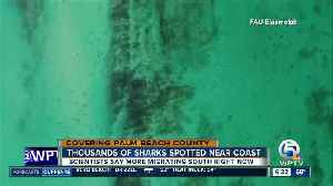 Shark migrations spotted offshore in Palm Beach County [Video]
