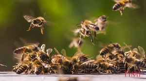 NEW STUDY FINDS HONEY BEE CAN DO MATHS [Video]