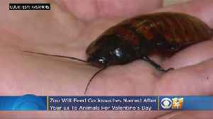 El Paso Zoo Will Feed Animals Cockroaches Named After Your Ex On Valentine's Day! [Video]