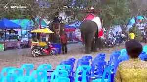 Panic as teenager clings to rampaging elephant's tusks at Thai country fair [Video]
