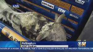Best Riders On The Best Bulls At PBR Event In Texas [Video]