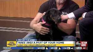 Pet of the week: Andi is a sweet girl who loves belly rubs and scritches [Video]