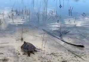 Turtle Released Into Wild After Pair Found Chained Together in Miami [Video]