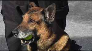 Exeter police K9 on road to recovery after training injury [Video]