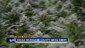 Growing hemp at Mitchell Park greenhouses could net millions [Video]