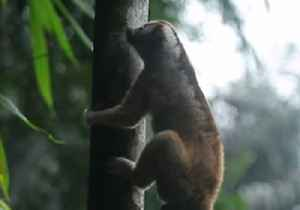 Slow Lorises Return to Indonesian Forest After Rescue From Poachers [Video]