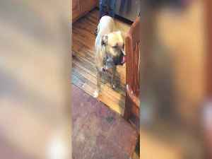 Guilty Pup Gets Caught! [Video]