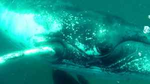 Whale smashes diver's camera with fin during close encounter [Video]