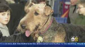 News video: Westminster Dog Show Opens In NYC