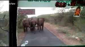 Panic on bus as elephant herd comes face-to-face with passengers in southern India [Video]
