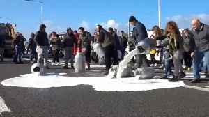Italian farmers dump milk in protest over falling prices [Video]