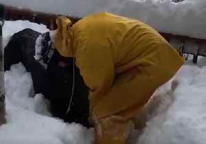 Man Has to Dig Out Snow Blower After Heavy Fall in California [Video]