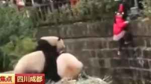 Girl rescued from panda enclosure [Video]