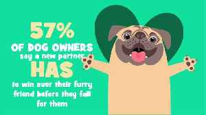 Turns Out Your Dog Has A Say In Your Dating Life [Video]