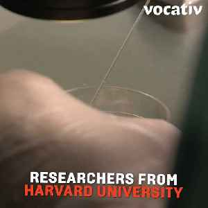 Surprising Harvard Study Finds Stoners Tend to Have Higher Sperm Count [Video]