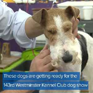 Westminster Kennel Club Dog Show [Video]
