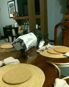 Cat Gets Stuck in Paper Bag and Falls off Table [Video]
