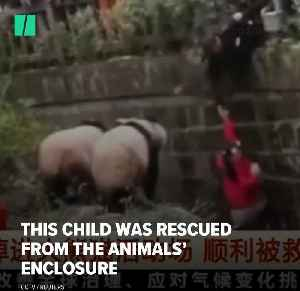 A Child's Dramatic Escape From Panda Enclosure [Video]