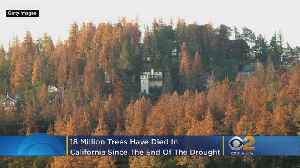 18 Million Trees Died In California Since End Of Drought [Video]