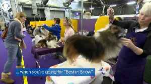 WEB EXTRA: Westminster Dog Show [Video]