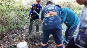 Thai fisherman in shock after finding giant python in his net [Video]