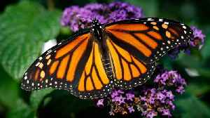 News video: Does Rapid Death Of Insects Mean Impending Extinction?