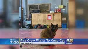 SF Firehouse Cat Evicted Over Sanitation Issues Gets A New Home [Video]