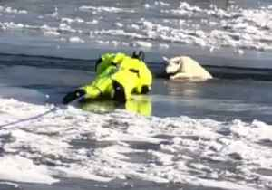 Dog Rescued After Falling Into Icy River in Nebraska [Video]