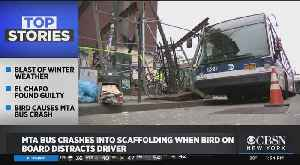 Pigeon Takes Out MTA Bus? [Video]