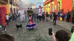 Stray dog steals the show at Mexican wedding parade [Video]