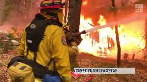 Unexpected Help for Firefighters [Video]