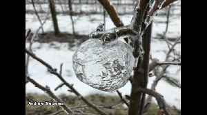 'Ghost apples' appear in Michigan orchard [Video]