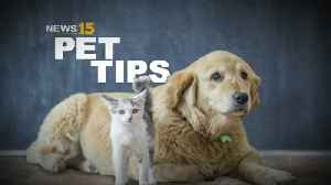Pet Tips [Video]