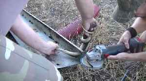 Back to the daily grind: Trapped snake freed from metal bar with angle grinder [Video]
