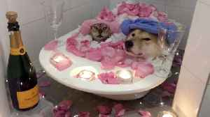 Couple goals: Adorable video of dog and cat sharing bath together [Video]