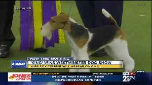 King wins Westminster Dog Show [Video]
