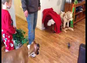 Dog vs Toy Helicopter – Who Will WIn? [Video]