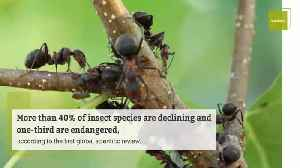 Loss of Insect Species Threatens All Life on Earth [Video]