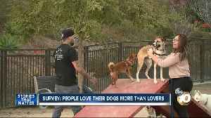 Survey: People love their dogs more than lovers [Video]