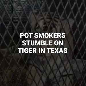 Pot Smokers Find Tiger In Abandoned House In Texas [Video]