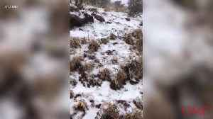 A Winter Storm Brought Snow to Maui, Hawaii [Video]